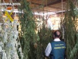 Cuatro heridos a escopetazos por intentar robar marihuana en Morata de Tajuña
