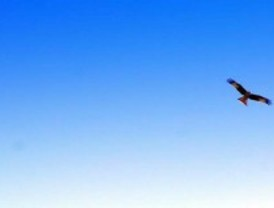 Liberan con éxito, por primera vez en el mundo, a dos águilas perdiceras criadas en cautividad