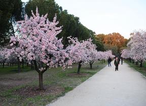 Domingo de 'picnic' en el parque Quinta de los Molinos