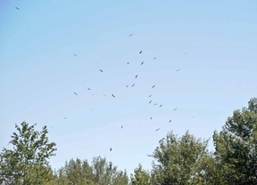 Aves a través del objetivo