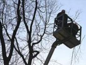 El saneamiento de árboles ocupará parcialmente 60 calles esta semana