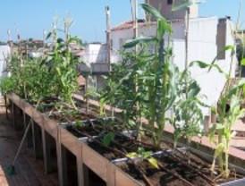 Una semilla para los huertos urbanos