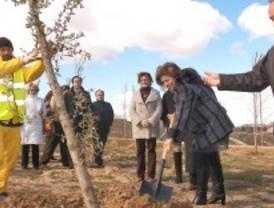 Quince hectáreas más de anillo forestal en la M-40