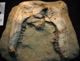 Miniexposición prehistórica en Príncipe Pío