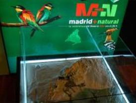 Tres Cantos acoge desde este viernes la muestra 'Madrid+Natural'
