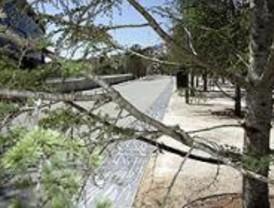 EL PSOE denuncia la tala de 45 árboles en la avenida del Manzanares