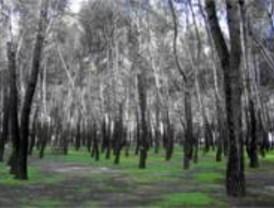 Más dotaciones y zonas ajardinadas para el parque de la Dehesa Boyal