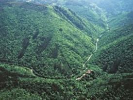 Las plantaciones de eucaliptos amenazan el paisaje gallego
