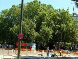 El proyecto definitivo del eje Prado-Recoletos no afectará a ningún árbol