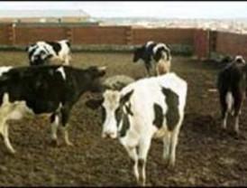 Un bufete recuerda la demanda interpuesta en el primer fallecimiento por vacas locas