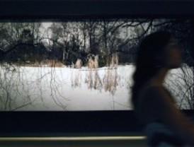 'Tiergarten', en el Museo Nacional del Romanticismo