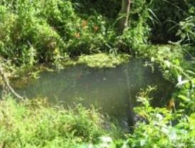 Pelayos de la Presa investiga la contaminación del Arroyo del Molino