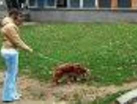 Más de 600.000 perros y gatos están registrados en la Comunidad