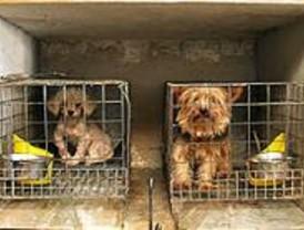 Los madrileños adoptaron más de 5.000 perros el año pasado