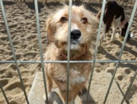 Aumentan las adopciones de animales en Madrid