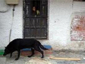 Acógelos.org recibió más de 300.000 consultas abandono de animales en 2007