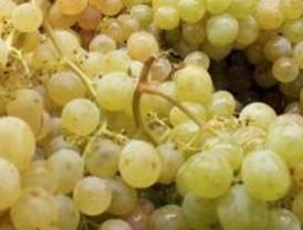 Lo que cuesta empezar el año con uvas