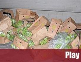 550 kilos de cocaína ocultos entre bananas