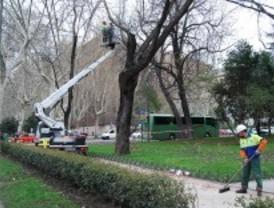 La poda de árboles obliga a cortar un centenar de calles en Madrid esta semana
