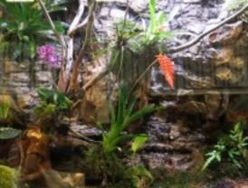 Reptiles, anfibios, artrópodos y peces se dan cita en Expoterraria 2012