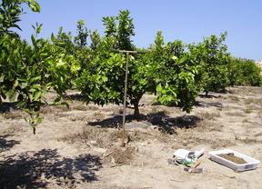 ¿Metales pesados en los suelos agrícolas españoles?