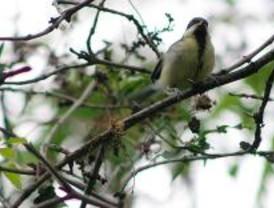 Seo/BirdLife organiza decenas de actividades para celebrar el Día de las Aves