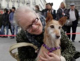Los perros de asistencia montan en transporte público
