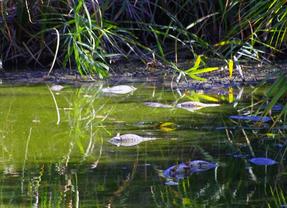 Las lagunas protegidas de Las Islillas se secan