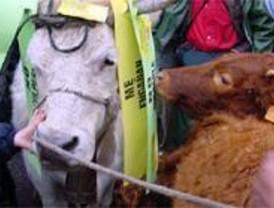 Miles de ganaderos vuelven a manifestarse en Madrid