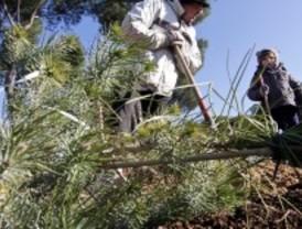 Plantación vecinal en la Dehesa de la Villa