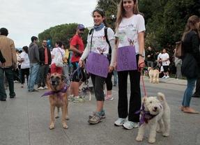 Teresa Romero presentará más de 270.000 firmas para evitar sacrificios de animales
