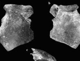 Nueva interpretación sobre la evolución del Homo Sapiens