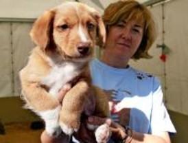 El Salón de la Adopción de Mascotas consigue 337 nuevas adopciones