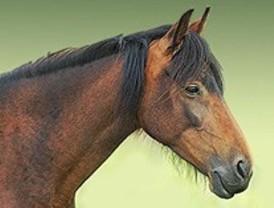El caballo serrano será recuperado