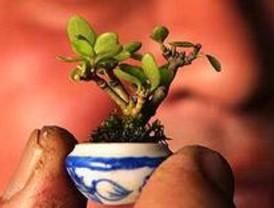 Exposición de bonsáis en el Parque del Oeste con ejemplares del Rey