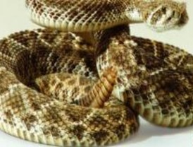 Mejores antídotos contra la serpiente de cascabel