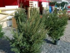 La recogida de árboles de Navidad de la capital comienza el lunes