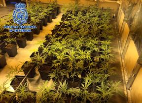1.735 plantas de marihuana en un chalet de lujo en Villaviciosa de Odón
