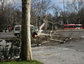 El viento provoca 145 avisos y 75 intervenciones de los Bomberos esta mañana