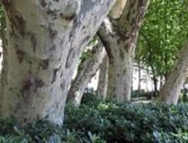 'Reyes del Bosque' exhibe en Alcalá los árboles más viejos de España