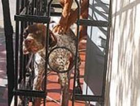 Arresto domiciliario por el impago de una multa tras abandonar a 2 perros