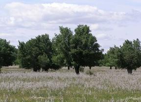 Moralzarzal desafecta 2,5 hectáreas de dehesa para hacer un colegio
