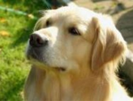 Citas para perros y bodas caninas a la carta