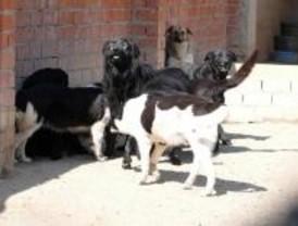 Un hombre con 'síndrome de Noé' acumulaba medio centenar de perros en una habitación