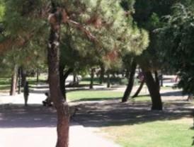 Las Rozas prepara la campaña municipal contra la procesionaria