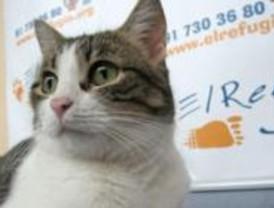 Condenado por lanzar tres cachorros de gato desde un coche en marcha