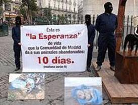 Voluntarios de CIAAM niegan el sacrificio masivo de animales