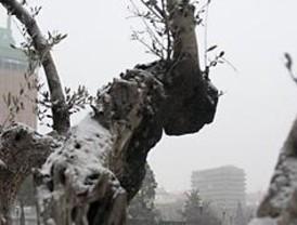 La nieve cubre la región y complica la circulación
