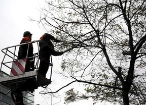 La poda de árboles cortará calles en 15 distritos esta semana