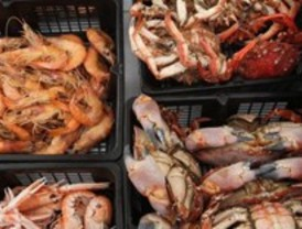 Más de 1.500 kilos de marisco en Colmenar Viejo